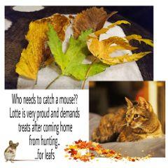 cat story leafs freetoedit