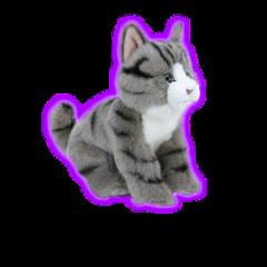 cat kitten freetoedit