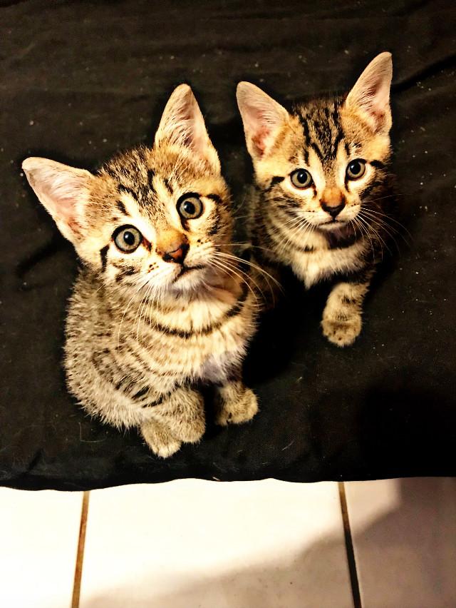 #cat #catsofpicsart #cateyes #catart #leo037 #myphoto #kittens