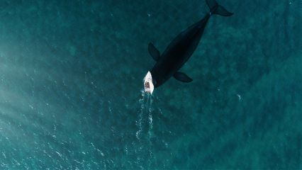 aerial water whale photography pa freetoedit