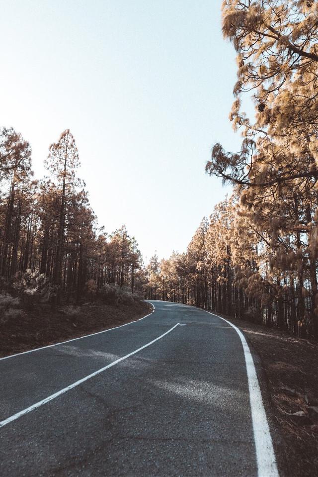 Road to wild •• My IG: instagram.com/isr4el    #freetoedit