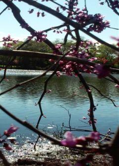 bayshore newyork park