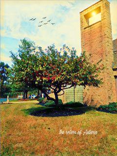 freetoedit autumnday tree building cloudsandbluesky