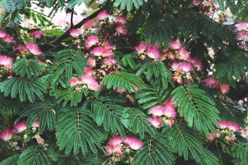 botany inflorescence tree colorful nature