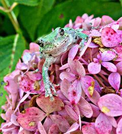 nature naturephotography photography flower treefrog