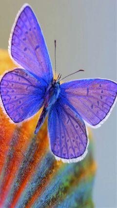butterfly beautiful nature wonderful fantastic
