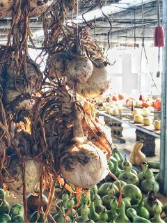onions market