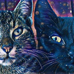 freetoedit cat cute