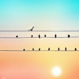 wapcolorgradient birdsonawire sunrise freetoedit myoriginalphoto