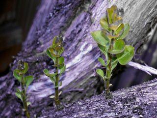 newbeginnings freetoedit trees leaves