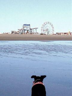 freetoedit myphotography mydog skegness beach
