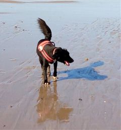 freetoedit myphotography mydog paddy beachlife
