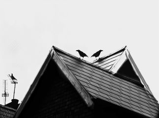 freetoedit birds roof