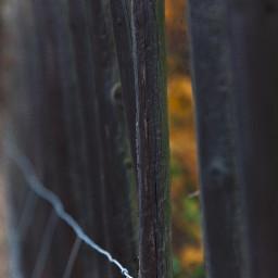 freetoedit photography photo photoshoot photographer