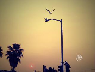 sunset sky bird edited