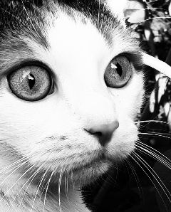 freetoedit cat mycat💞 mycat