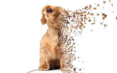 dogs dispersion freetoedit