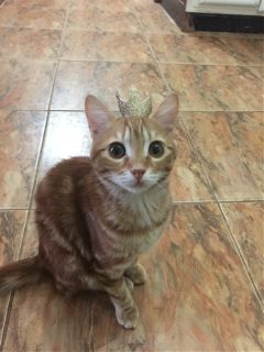 cat queen cute