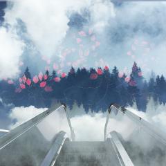 escalatorremix freetoedit trees fog forest