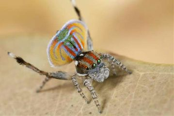 spider color