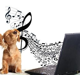 freetoedit dog music laptop headphones