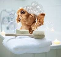 freetoedit puppystickerremix bubble bathtime