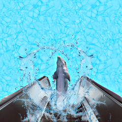 dolphin water watersplash bluewater blue freetoedit