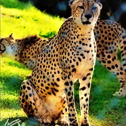 freetoedit guepardo estepona animals pcdots pctakemebacktuesday pcpets pcasingleitem pcpolkadot pcanimalselfie pccolororange pcanimaladventures pccentered pczoo mybestphoto