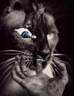 freetoedit scary spooky siamesecat