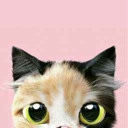 cat freetoedit cute cutecat animal