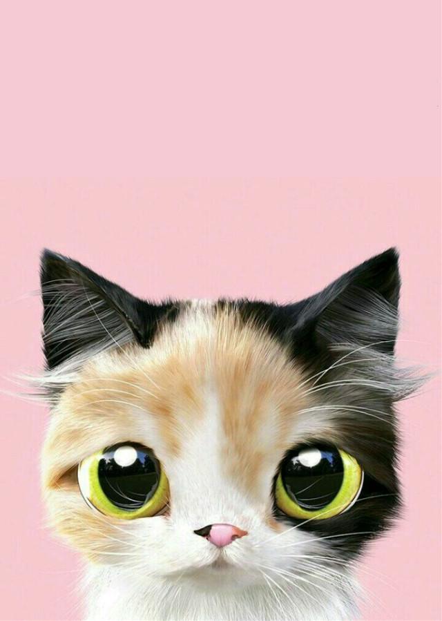 #cat#cute #cutecat #animal #cutie #cutiecat