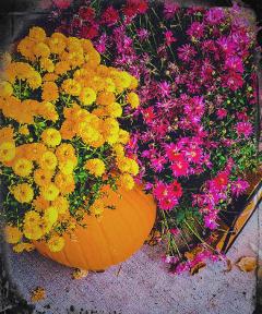 mumflowers holidays pumpkins vegetables colorful