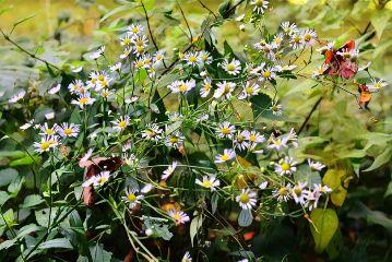 photography nature macro emotion wildflowers