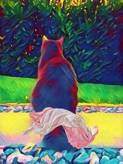 freetoedit art cat katze garden