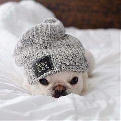 freetoedit puppy cute loveyourmelon
