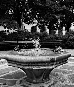 blackandwhite fountain pigeons streetphotography streetlife