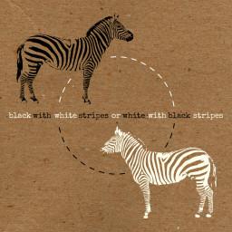 collage cutandpaste composition digitalart edit graphic zebra color contrast perspective stripes offwhite black