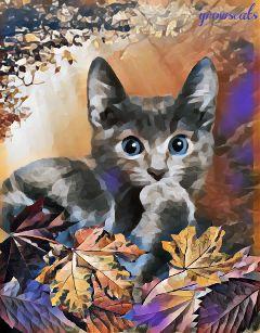 freetoedit cat kitten autum catsofpicsart