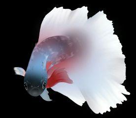 fish realistic drawing myart mydraw