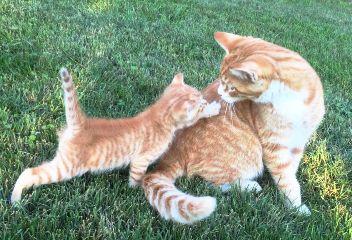 angrycats freetoedit