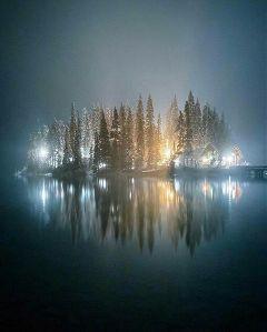 light dark night trees   .   .   .    . trees