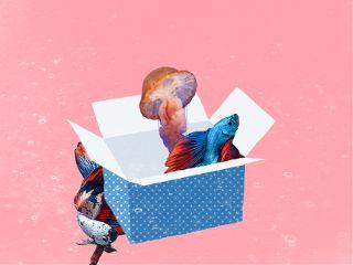 emptybox freetoedit fish