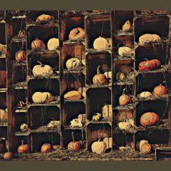 pumpkins edited maplesidefarm ohio