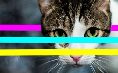 freetoedit cateyes cat colours