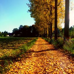 nature autumn fall beautifulday sunnyday