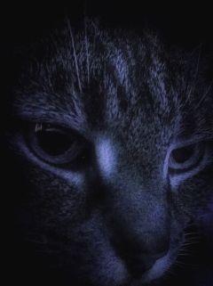 cat closeup night eyes atmosphere