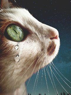 freetoedit cat cateyes cute petsandanimals