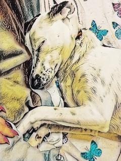mybaby mydog love bestfriend