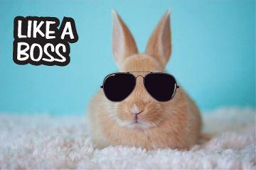 likeabossstickerremix freetoedit bunny cool