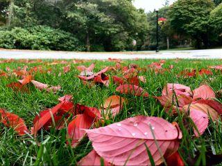 freetoedit leaves fall fallcolors trees